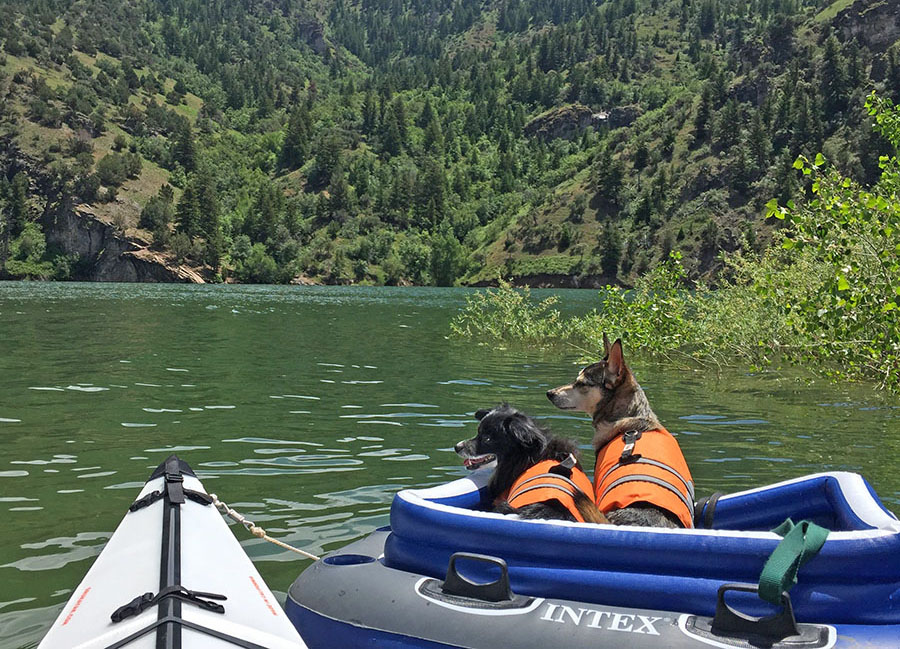 Van Buren's dogs enjoy Porcupine Reservoir from their